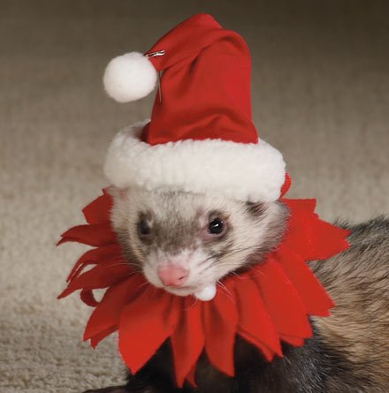 Marshall Ferret Santa Suit