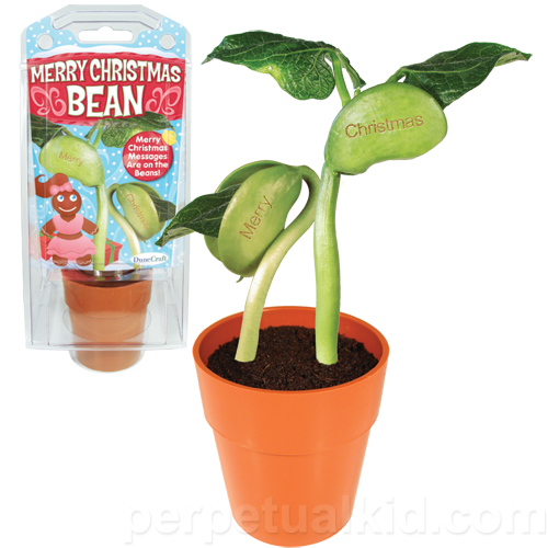 GROW A MERRY CHRISTMAS BEAN KIT