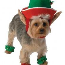 Go Dog Holiday Elf Dog Costume