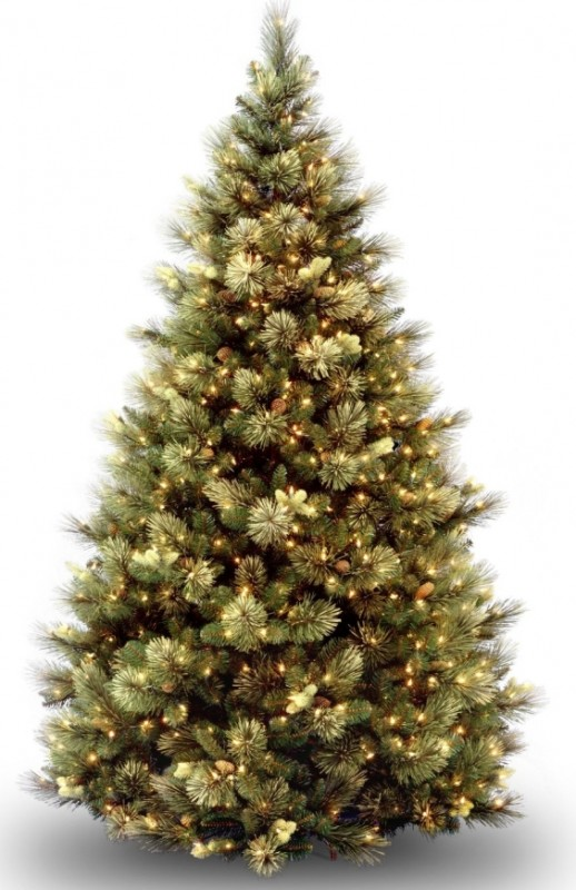 Carolina Pine Tree