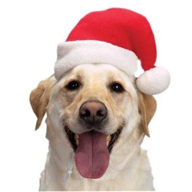 Santa Dog Hat