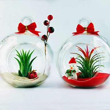 Holiday Globe Set of Two Christmas Terrariums