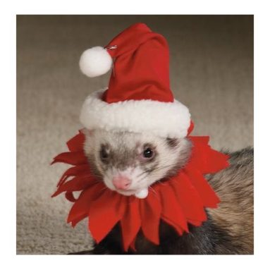 Marshall Ferret Santa Suit