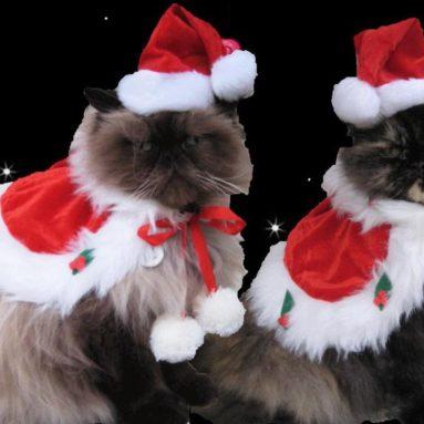 holiday cape and Santa hat